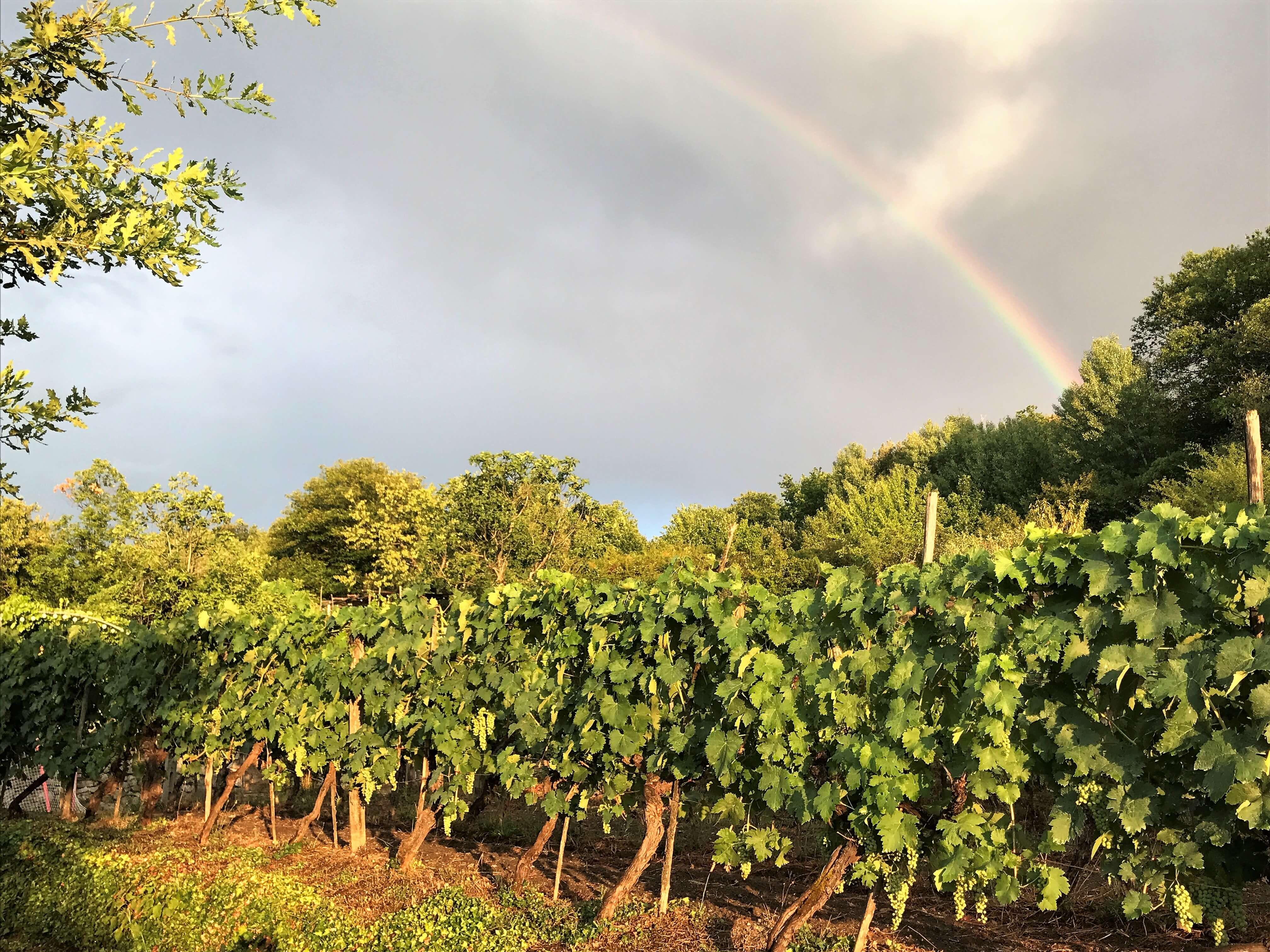 Her kommer noen vintips til nye viner. Denne gangen er det jo dyrere, desto bedre. 1. september settes det nye viner fram på Vinmonopolet. Her et bilde fra egne druer på vingården vår i Italia.
