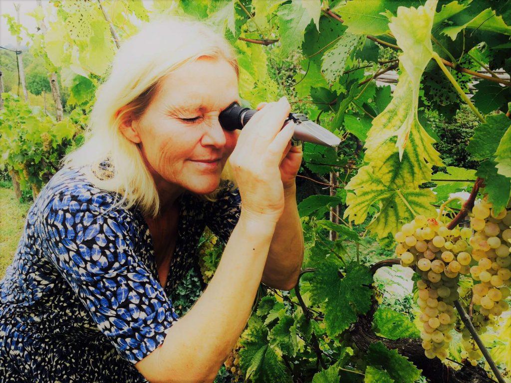 Med et hydrometer, også kalt mostimeter, kan vi måle sukker og alkohol i vin, eller mosten fra druer som gjærer. Det er et viktig instrument i vinproduksjonen. På bildet bruker jeg et refraktometer for å måle sukker i druene før de høstes.