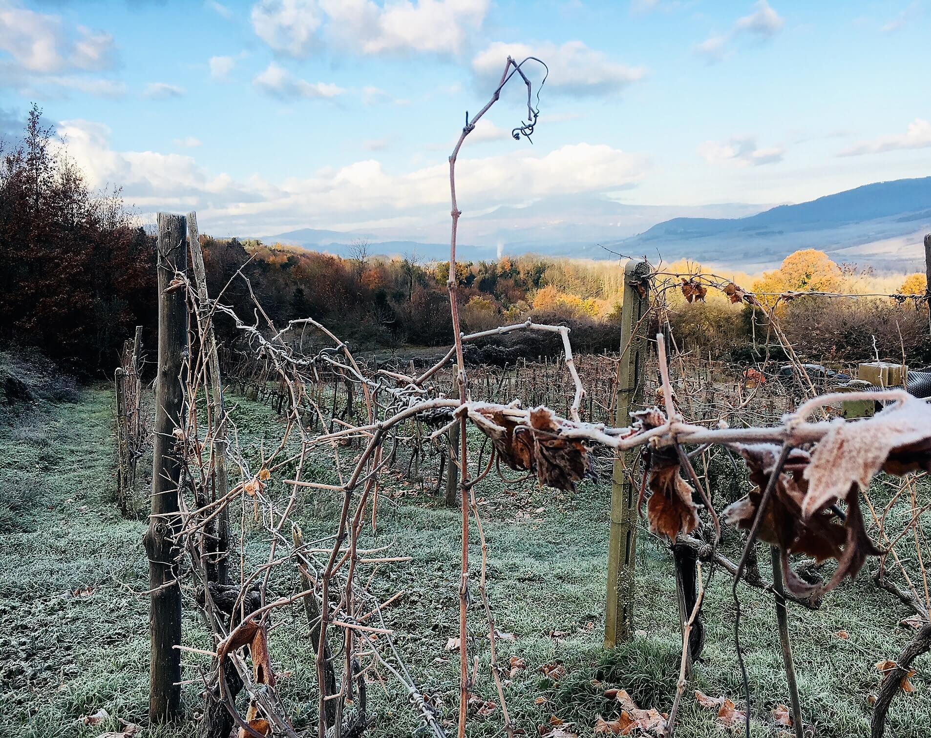 Det er tid for vinteronn eller vinterarbeid på vingården. Vinstokkene skal beskjæres før det blir for varmt i luft og mens sevja fortsatt ligger i dvale. Det er det første arbeidet med det som skal bli årets vin.
