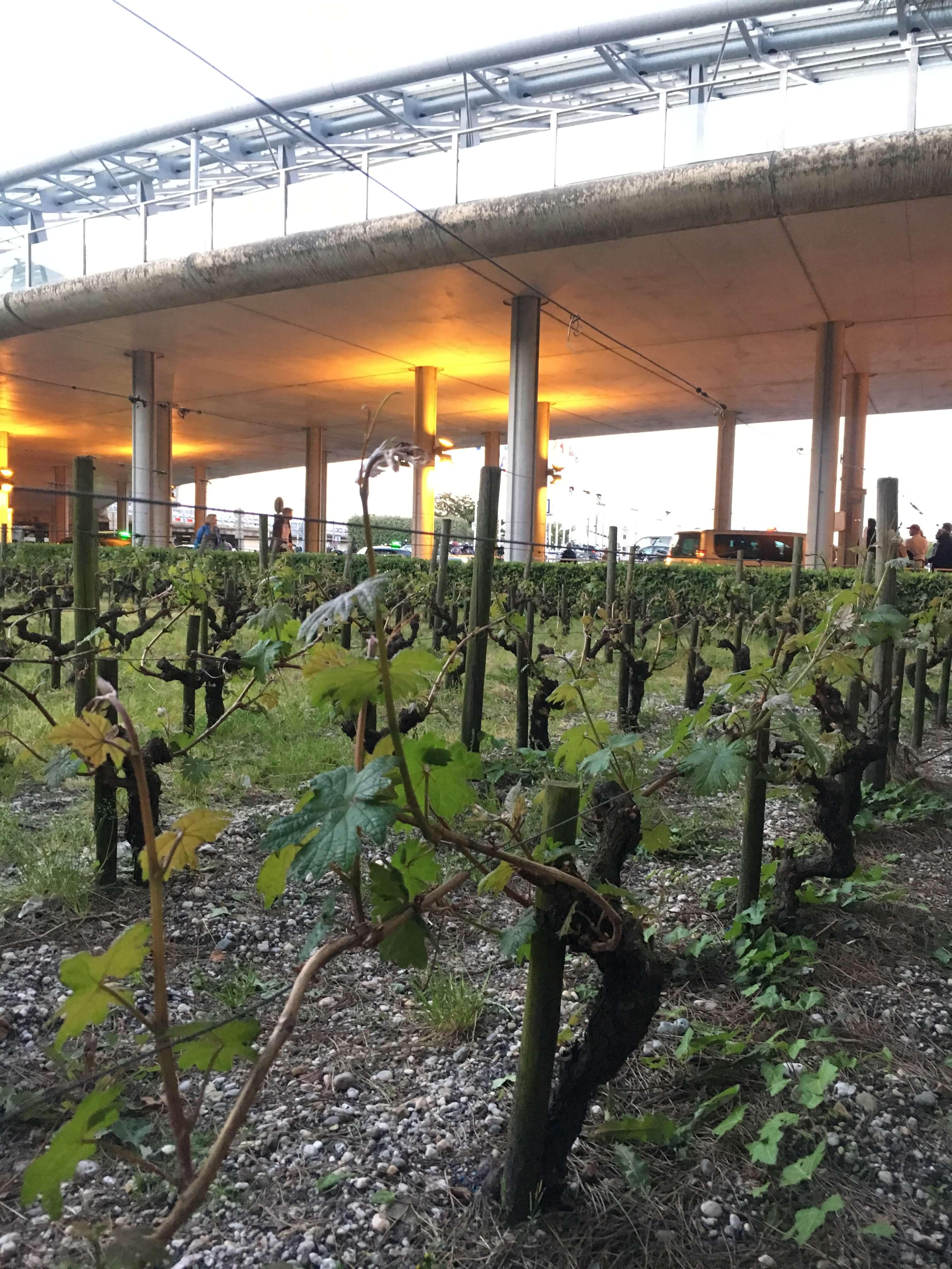 Bordeaux - ærverdige slott, dyre viner og ett av verdens mest prestisjefylte vindistrikt. Og, heldigvis: en vintur til Bordeaux er kun en kort og rimelig flytur unna Norge. Å få oppleve ulike vindistrikt, deres klima, vinstokker og måten de dyrkes på og smake på vinen er en stor glede.