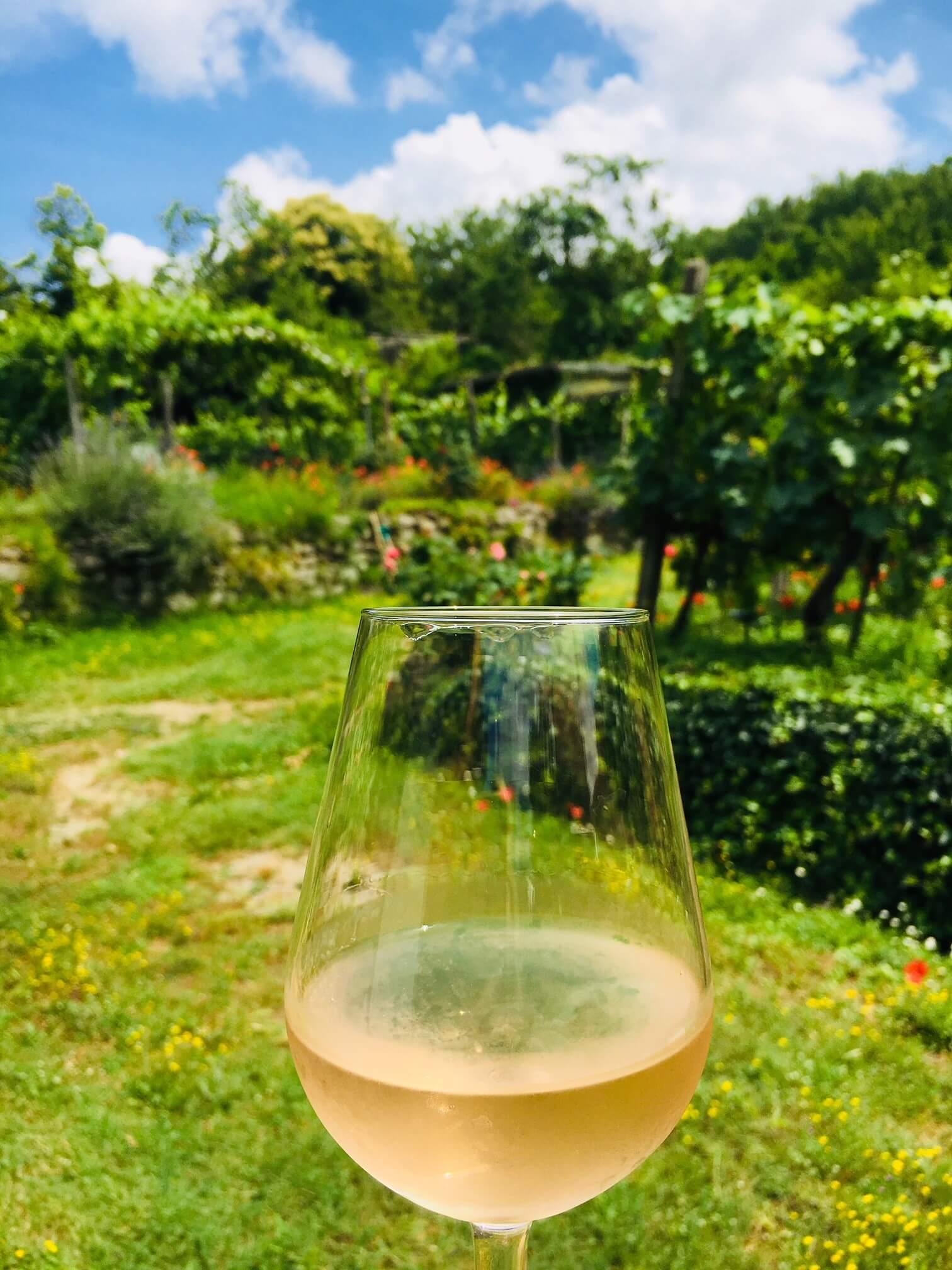 Vi nordmenn har latt oss forføre av rosa vin. Rosévin har hatt en enorm salgsøkning. Den er lett som en hvitvin, innbydende i farge, frisk og svært matvennlig. Her kan du lese litt om hvordan denne vinen blir til og noen forslag til roséviner.