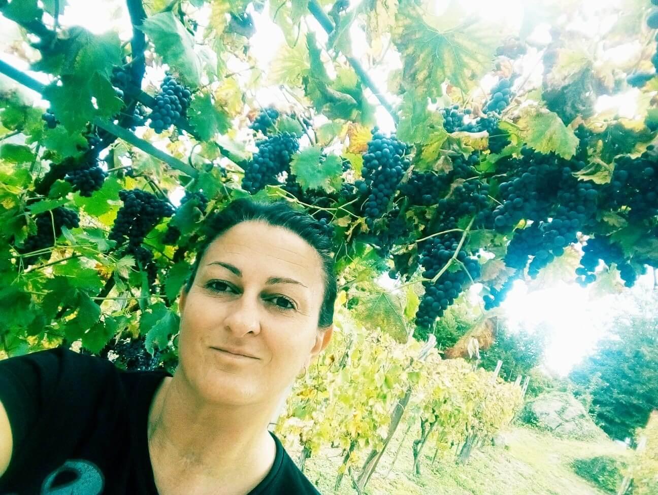 Å høste druer er selve klimaks i året på vingården. I år ligger det en ekstra spenning over årets innhøsting. Det har vært to usedvanlige år her på vingården med rekordvarme i fjor og mye regn i år. Men nå står over 1000 liter druemost i vinkjelleren. Vi venter på at det skal gjære og bli til vin.