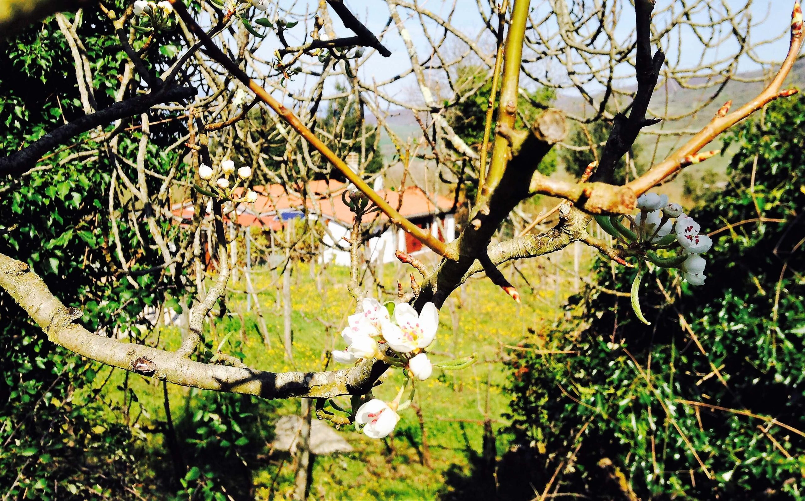 While we are waiting for spring in the vineyard – a video from February