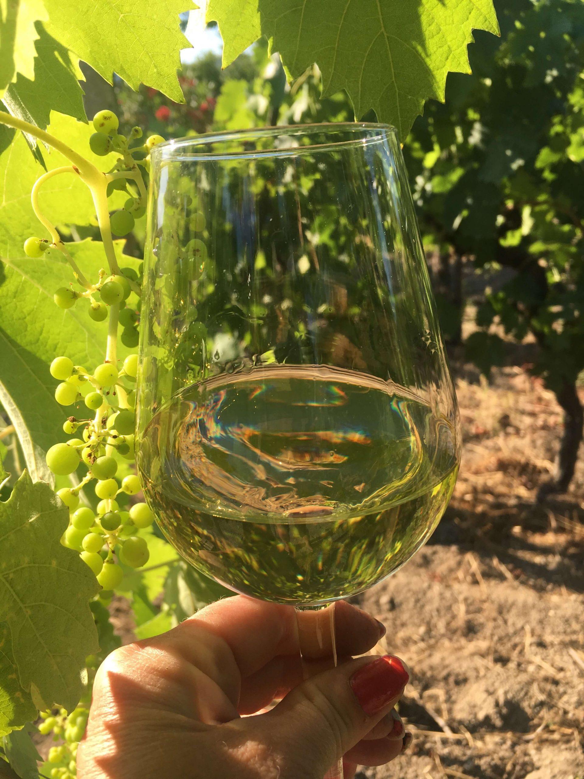 Prøv en ny drue og vin – 9 vintips