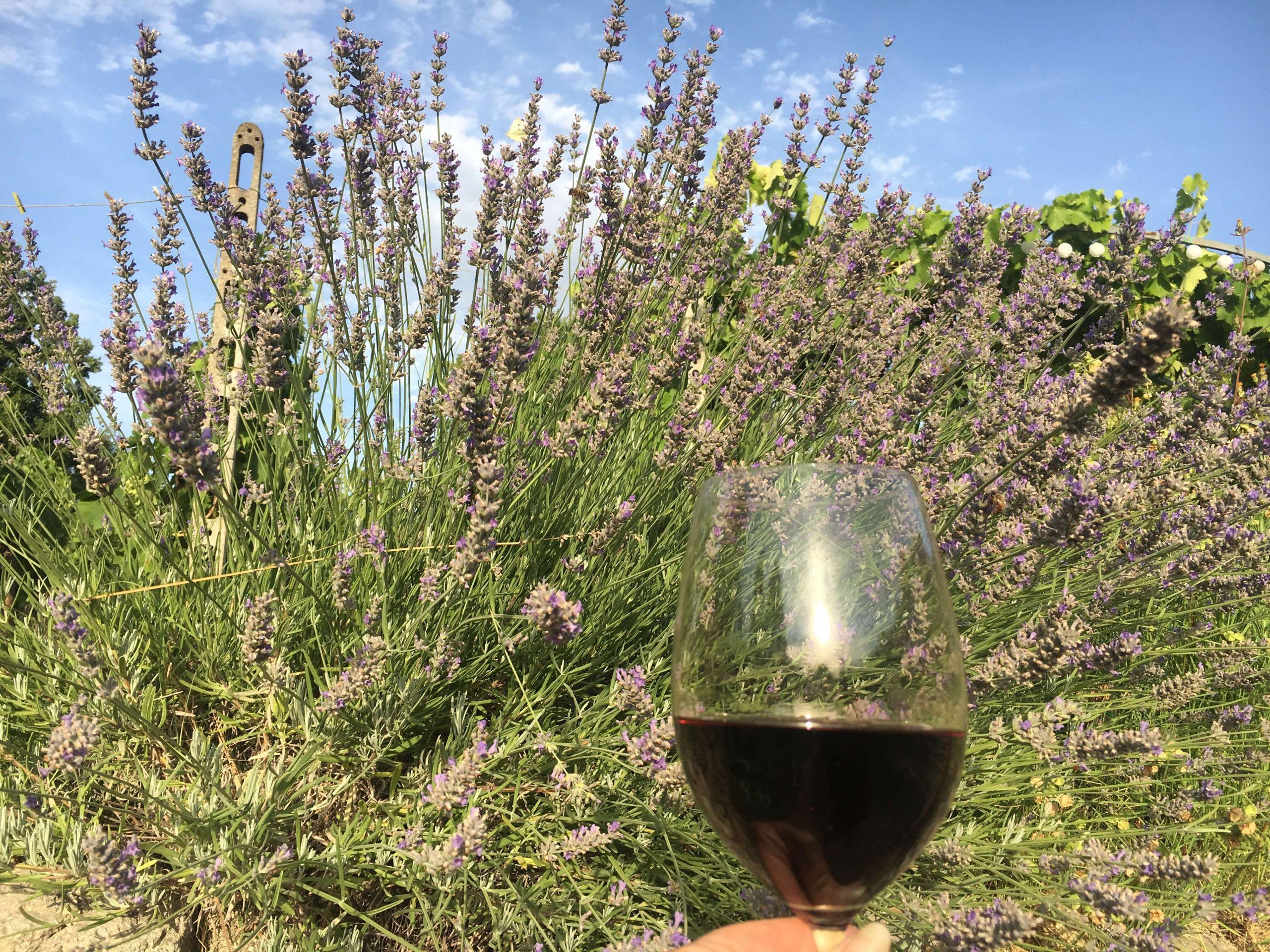 Blomster og vin – 6 vintips til hagen