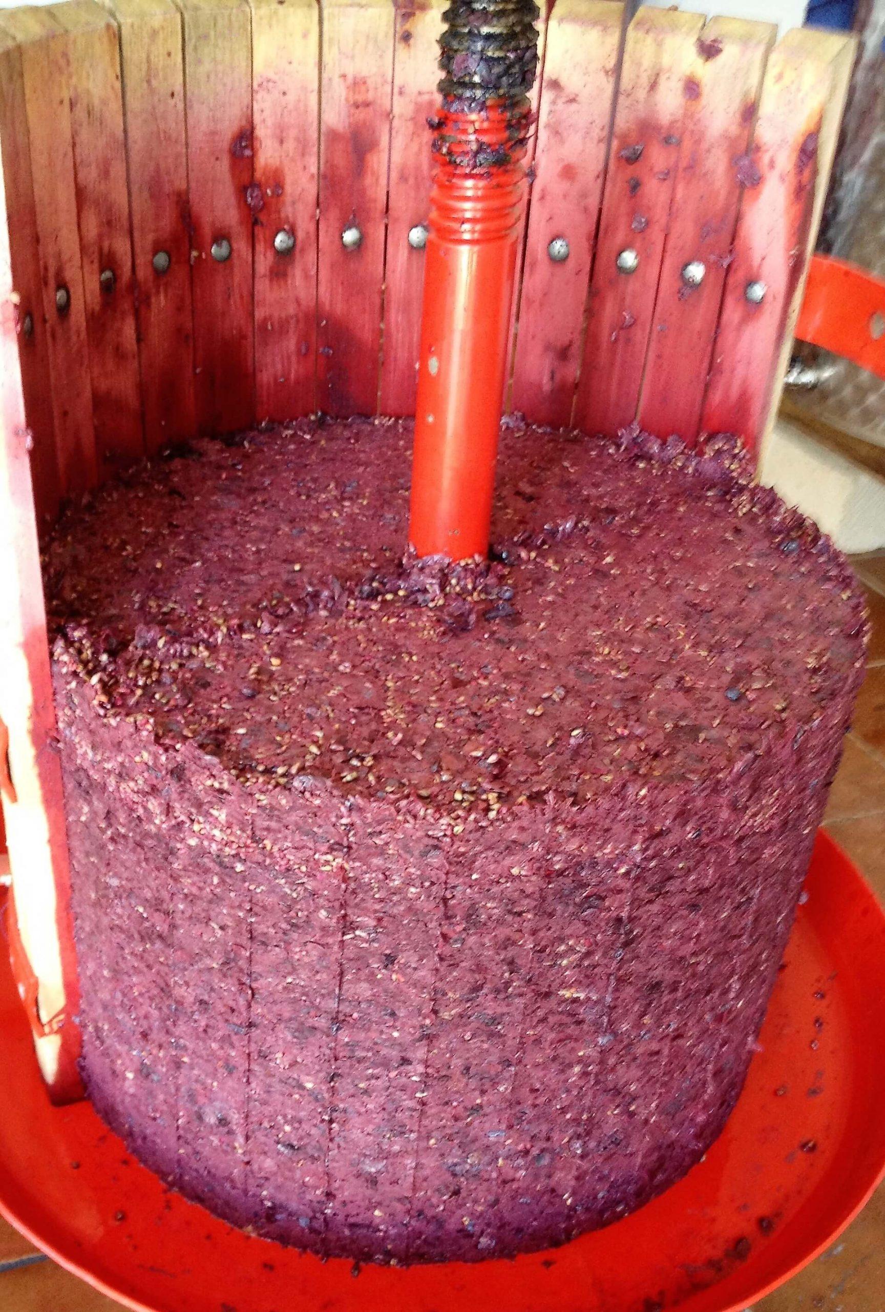 Årets røde druer og vin er ferdig gjæret