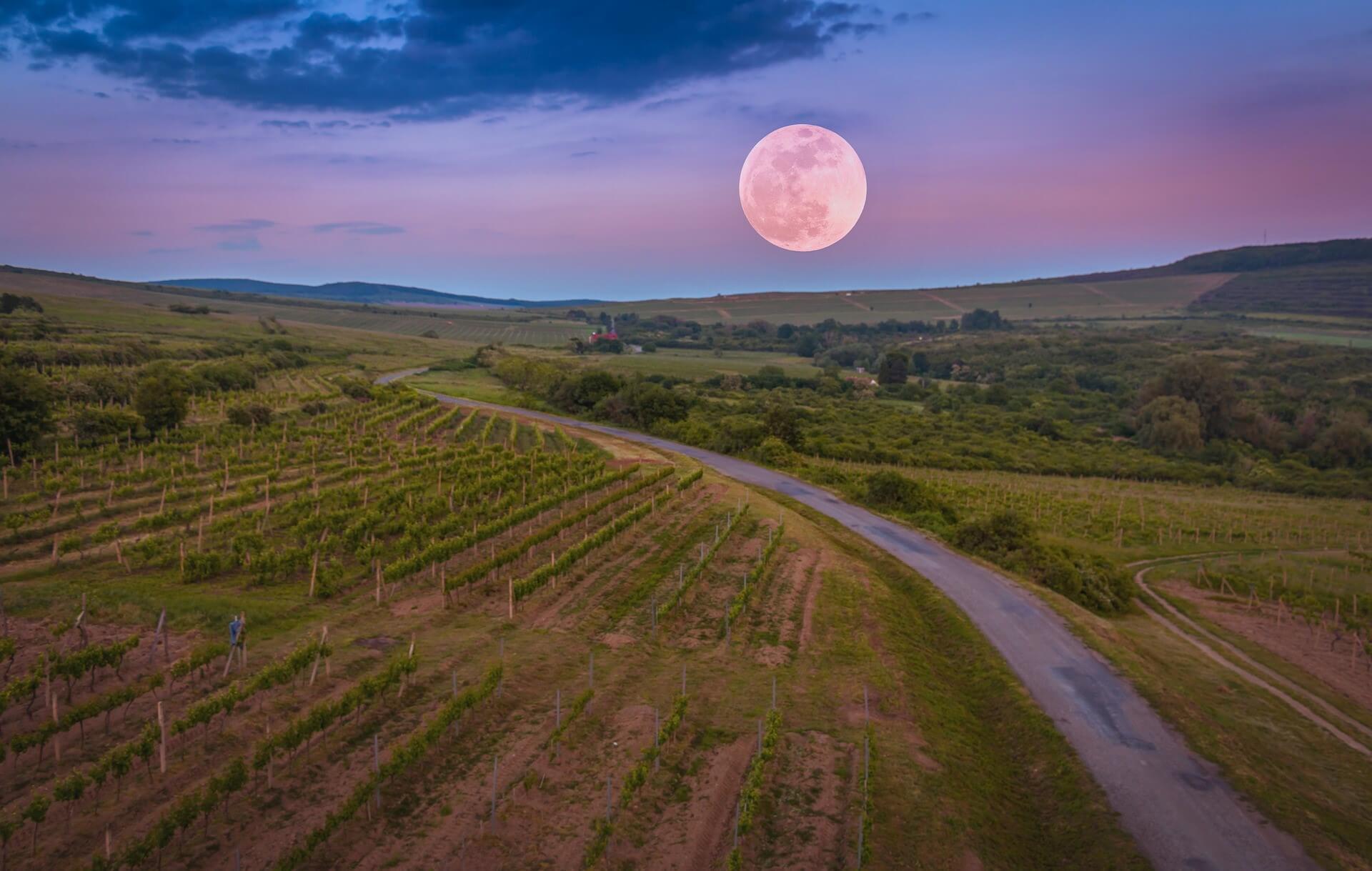 Er det riktig at månen påvirker vin?