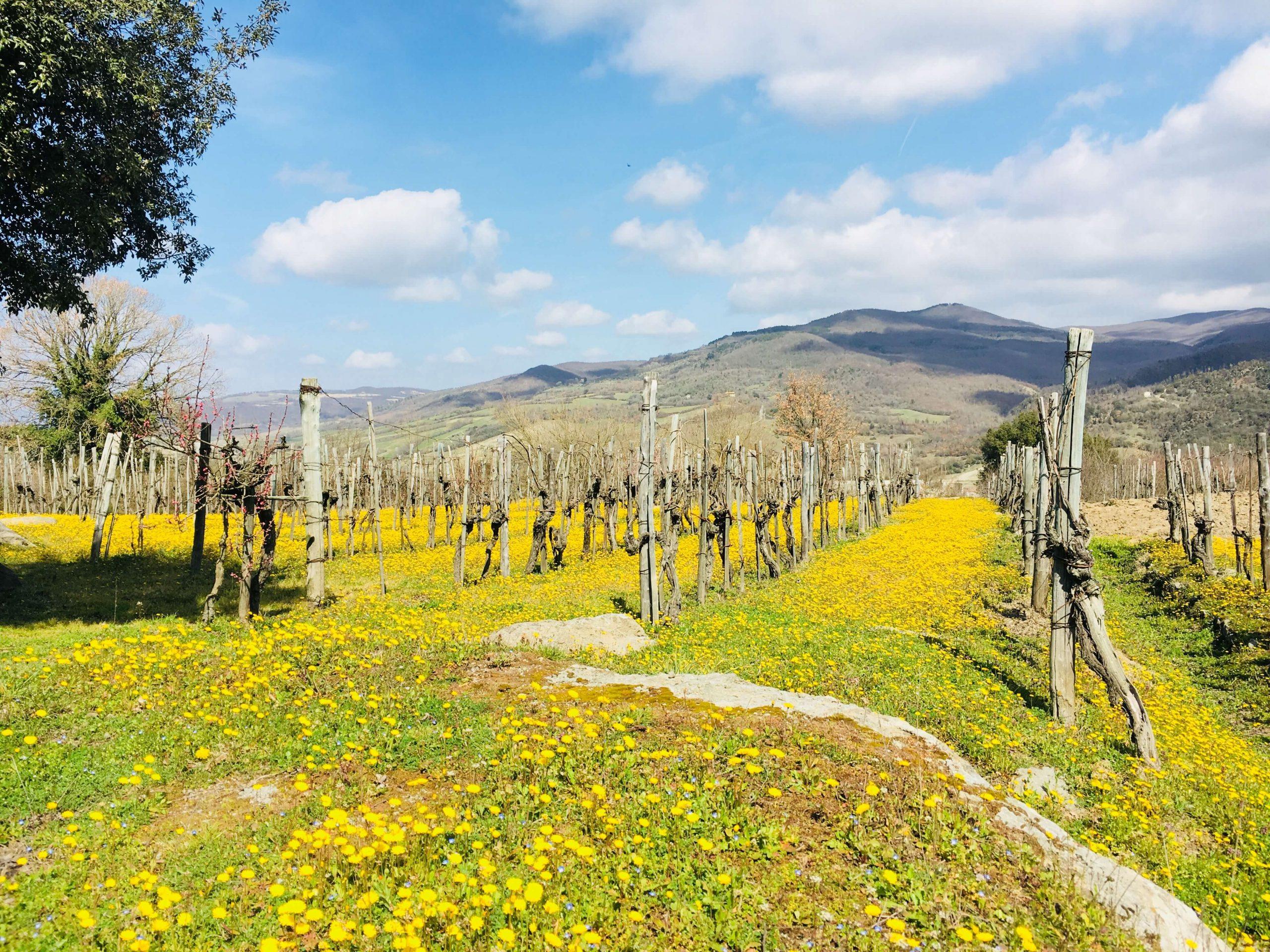 Påske på vingården