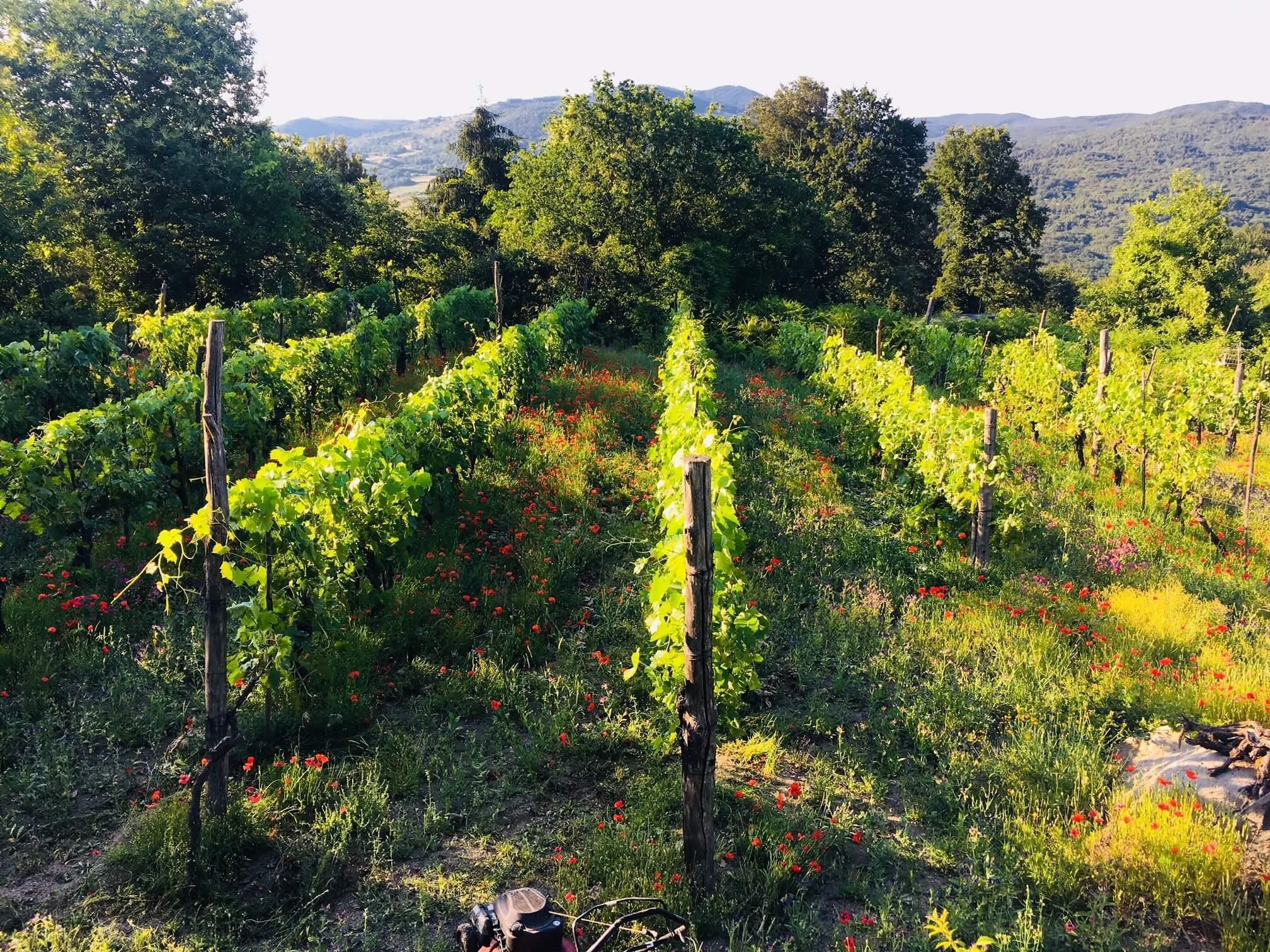 Alenetid på vingården – paradis med prosjekter