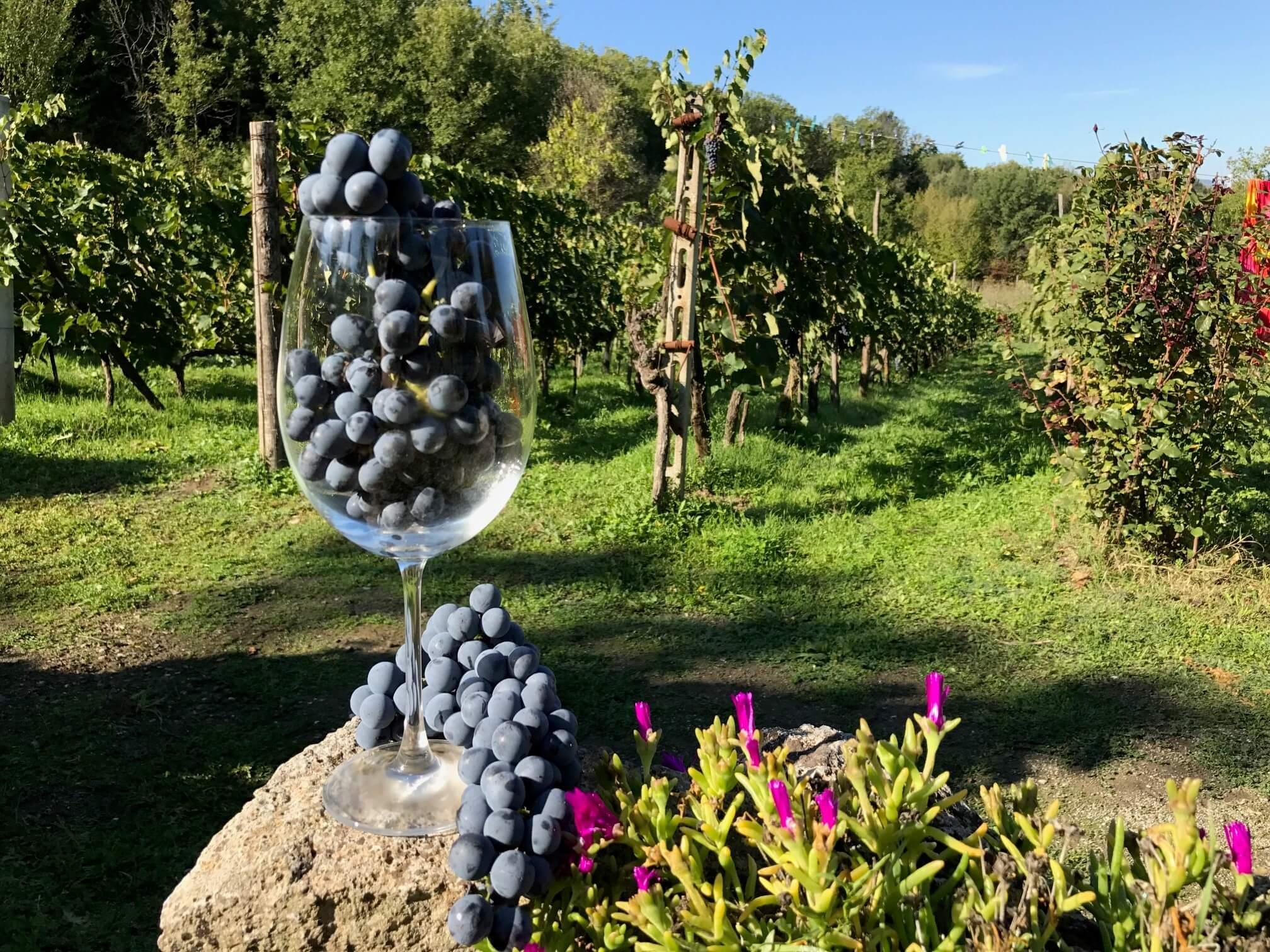 Hvor mange druer er det i ett glass vin?