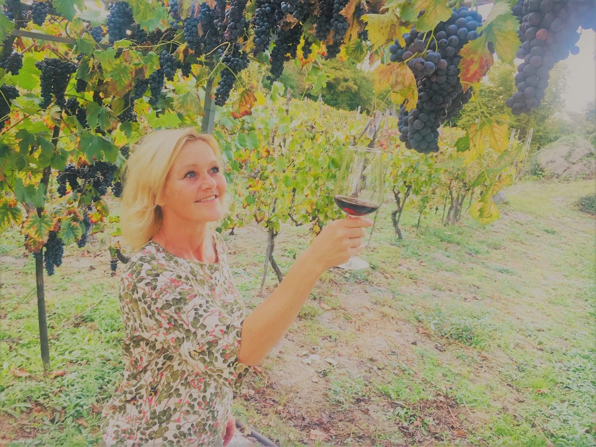 Spennende innhøsting av druer på vingården
