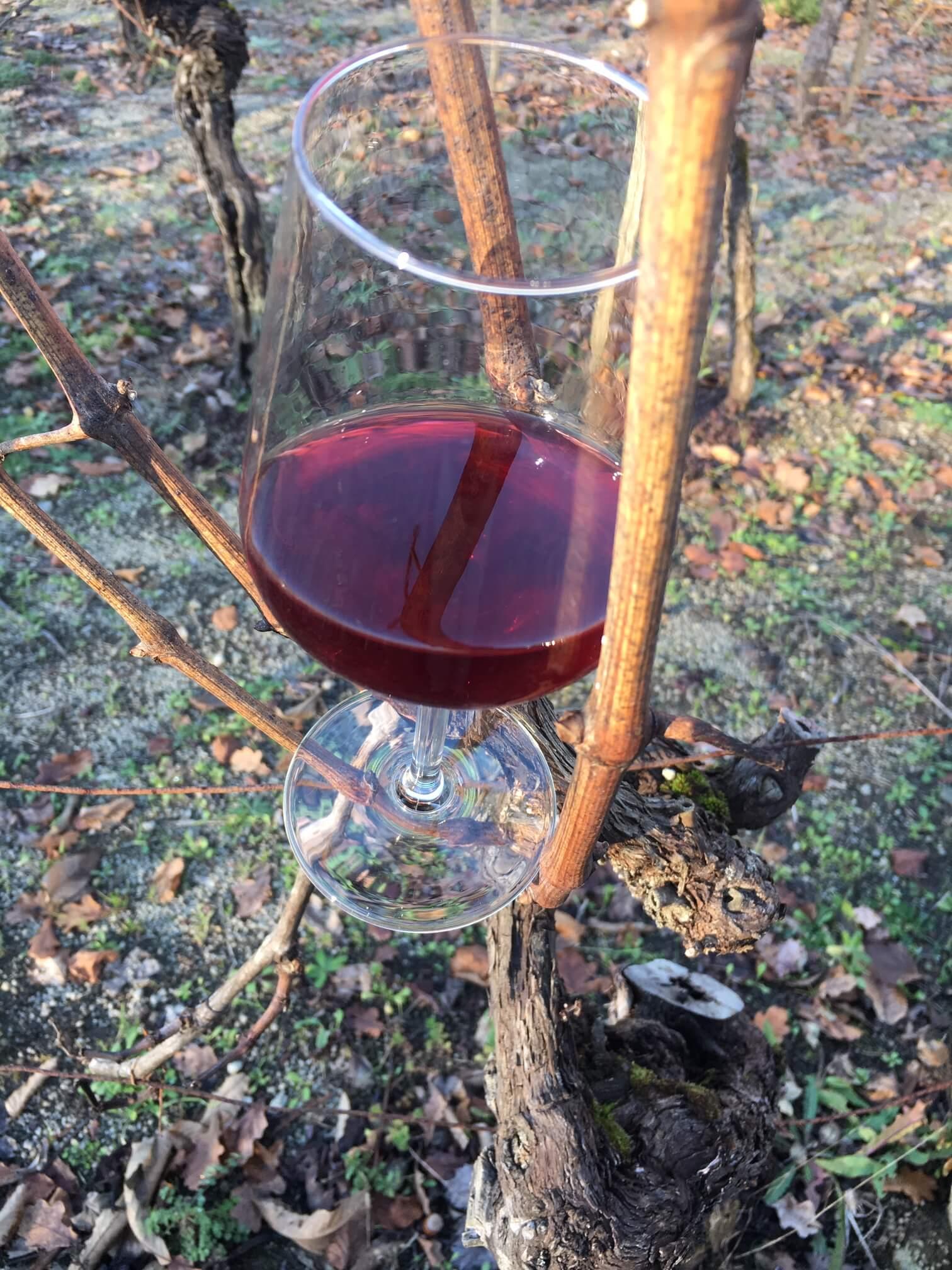 Det er årets siste arbeid med den nye vinen. Den trenger en siste hånd før vinteren setter inn. Vinen skal pumpes over fra en tank til en annen, og den kan prøvesmakes. I den lave desembersola dukker det opp farger og liv på vingården i Italia.