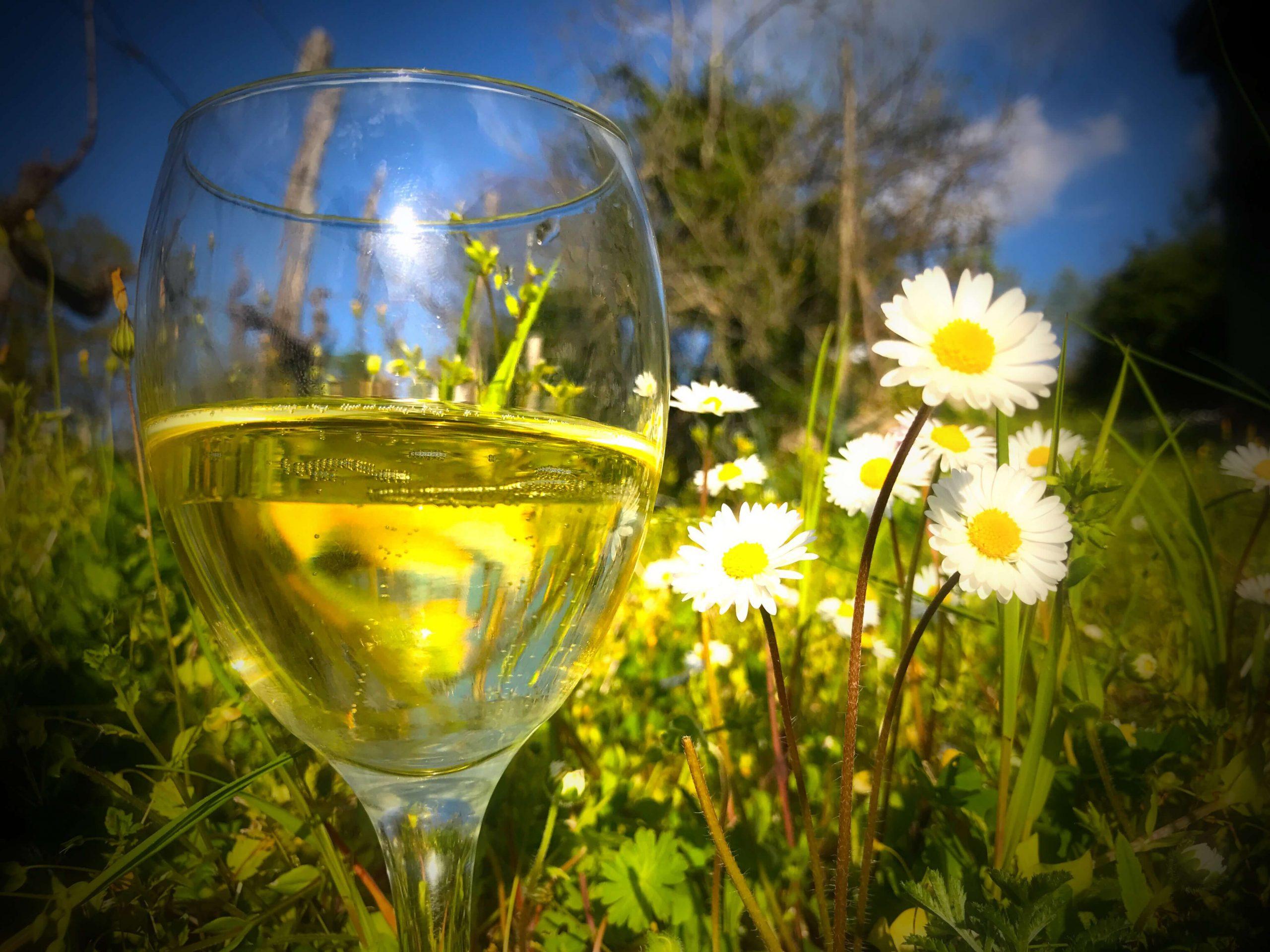 Nye viner i mars – vårviner