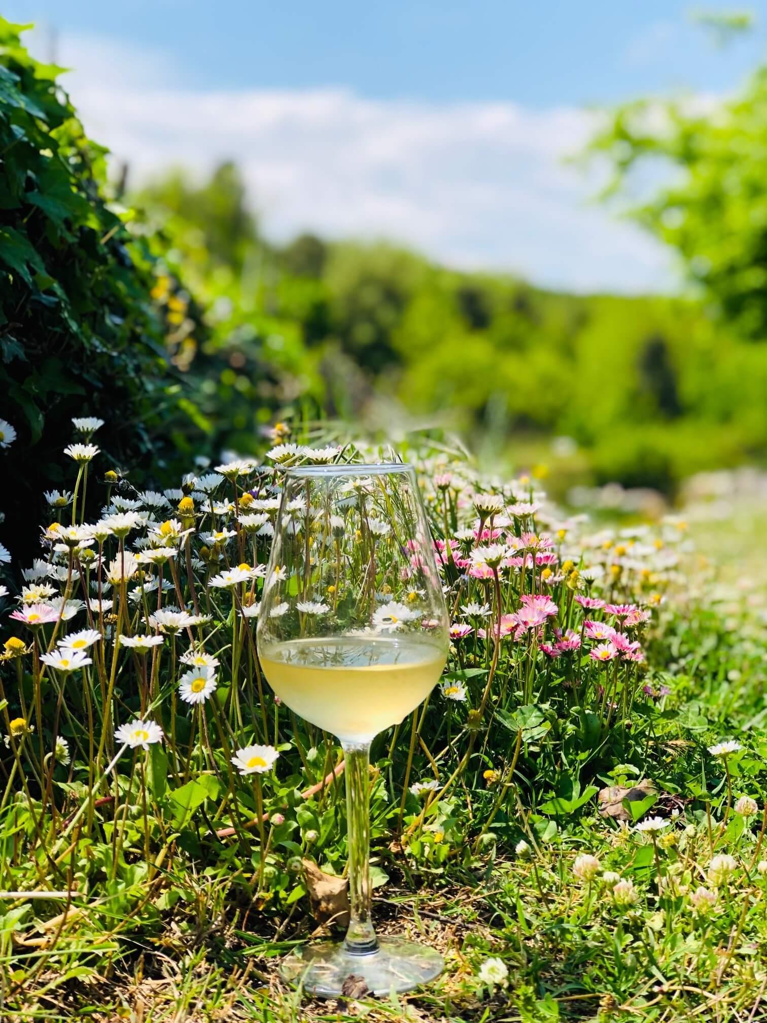 Vinslipp i mai – lyse og lette viner