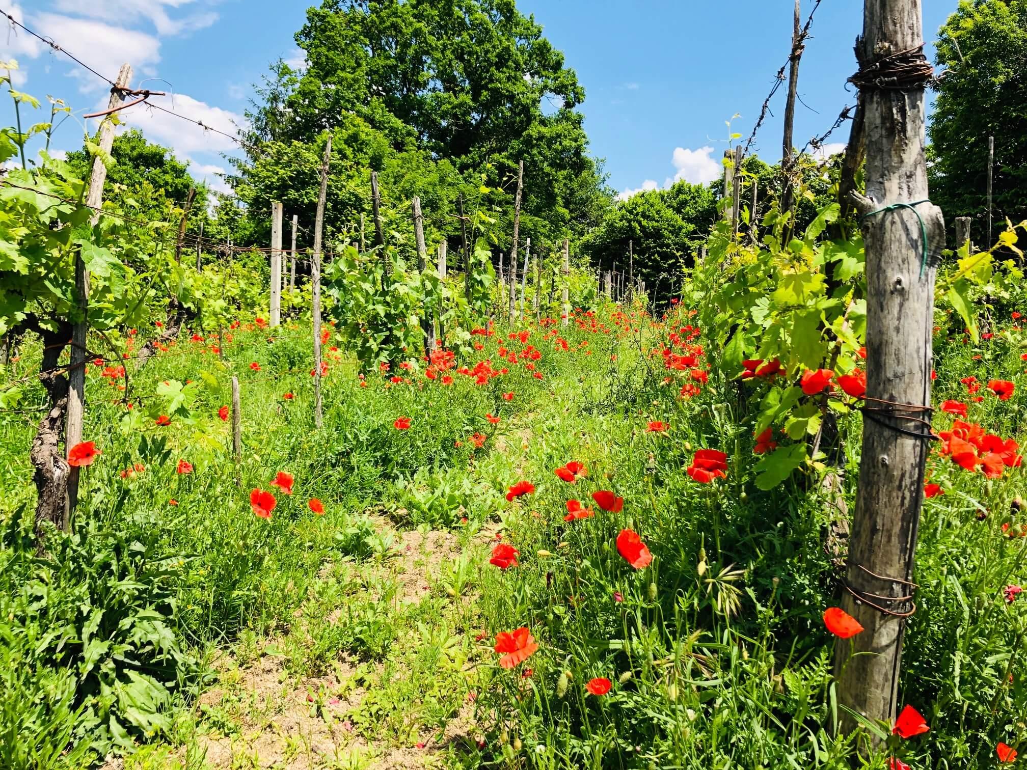 Fra blomstereng til polert vinmark