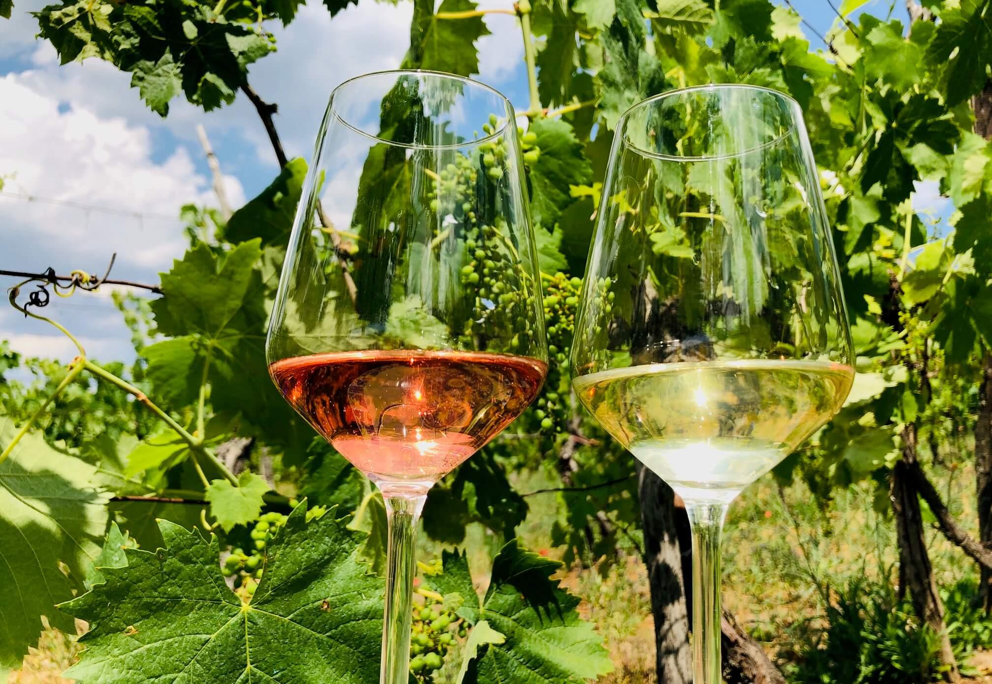 Det er tid for sommerlige viner på julislippet på Vinmonopolet. Her er noen av mine favoritter blant nyhetene som settes ut i hyllene 5. juli. Det er både musserende, hvitvin, rosévin og rødvin. De passer til varme sommerdager eller til grillaften.
