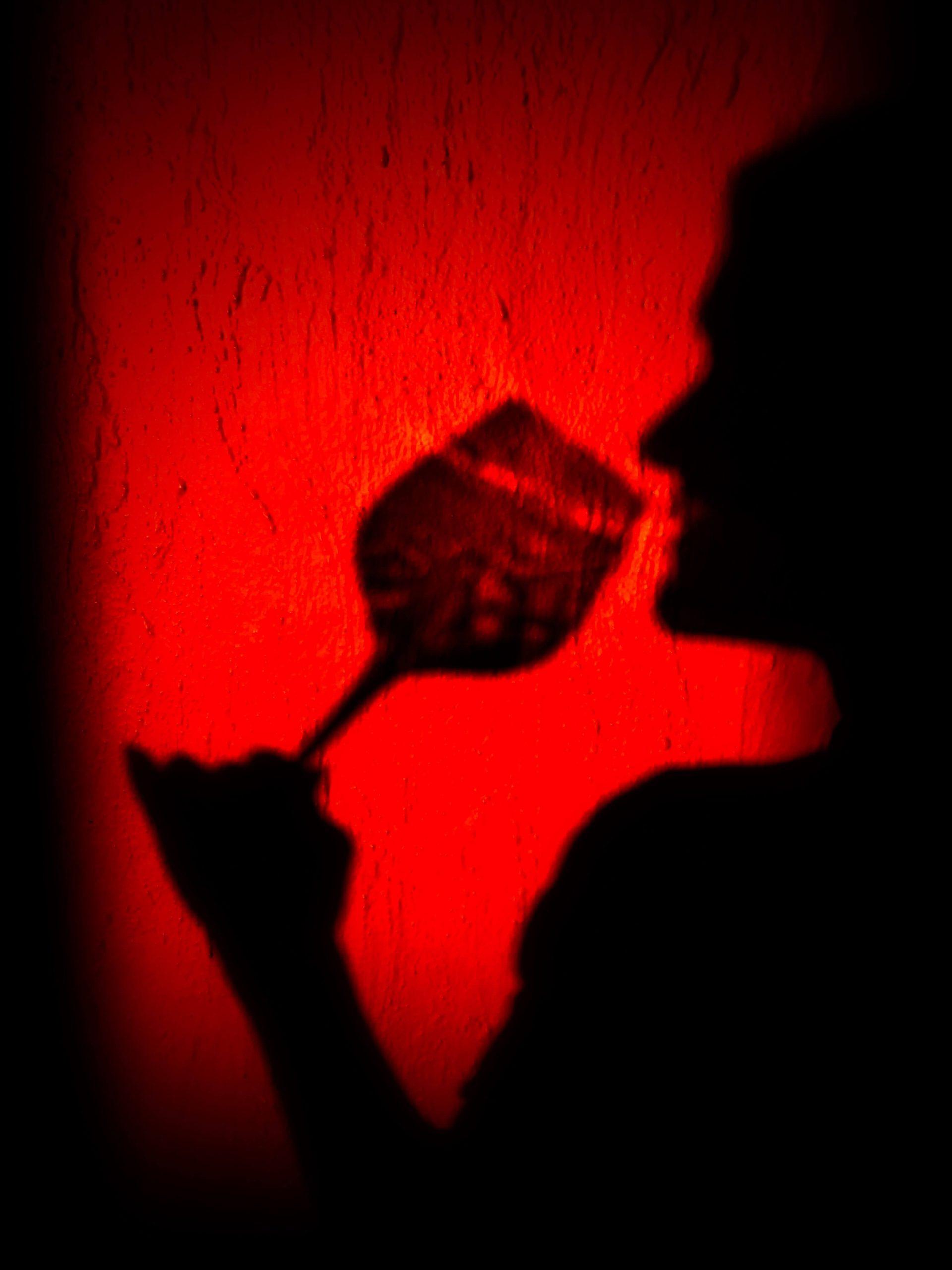 Nye viner i januar