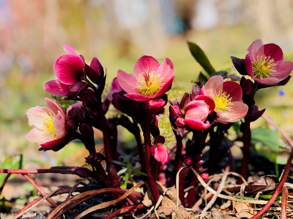 Når sola varmer og knuppene springer ut, vekkes lysten på roséviner, eller hva? Her får du forslag til 10 rosa viner som bør passe til vår og sommer.
