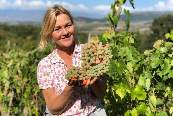 Hver innhøsting er spennende, men vinhøsten 2020 er det på en ny måte. Har du druene klart seg etter varmen og så regnet, og vil vi vi i det hele tatt klare å høste dem på vingården vår i Italia?