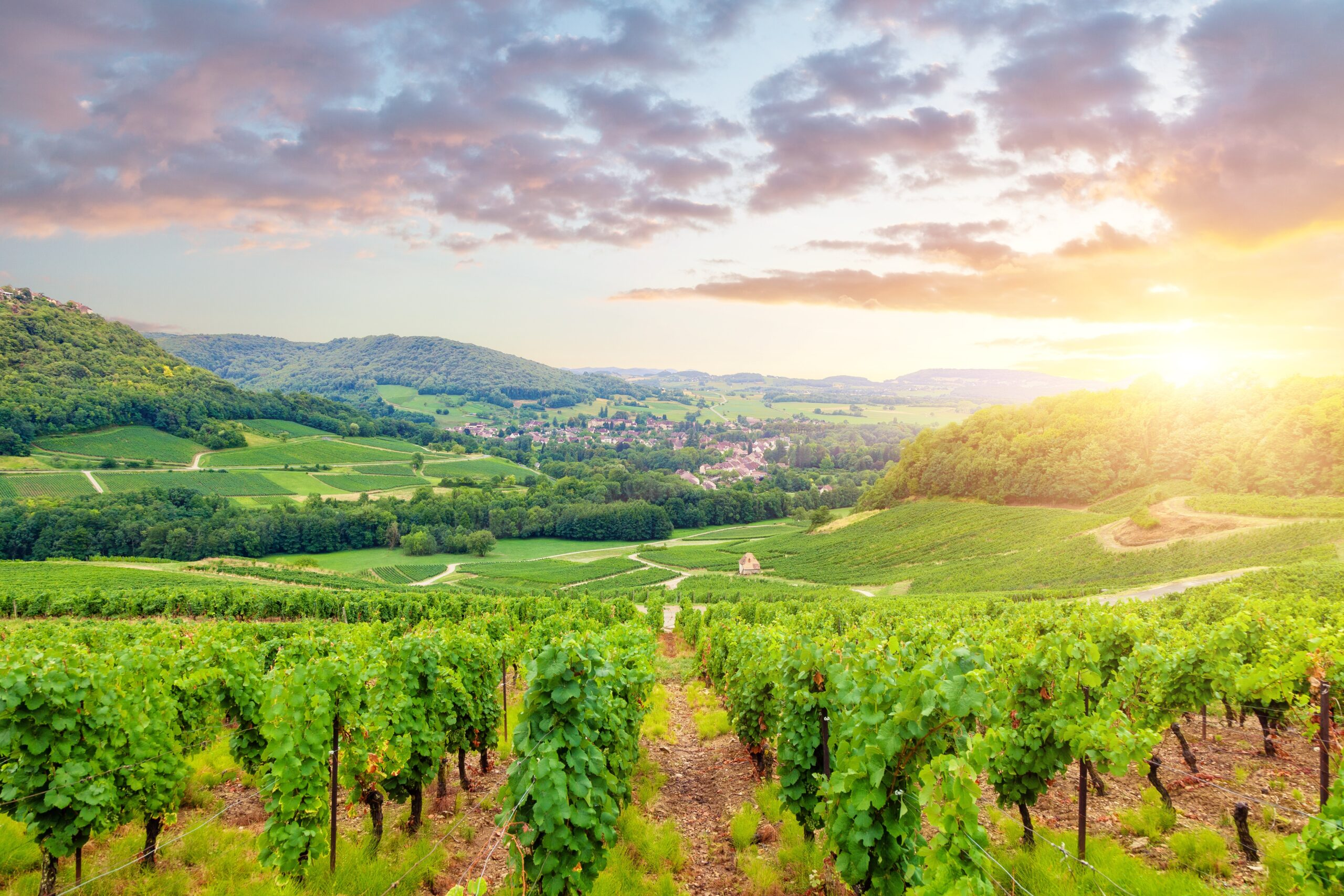 Viner fra Burgund versus California