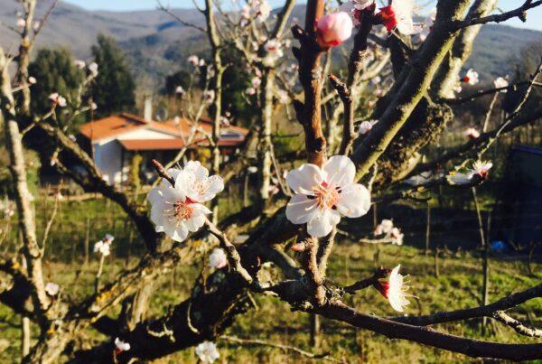 Det går mot lysere tider. Det preges også slipp av nye viner i mars. Her er forslag til 18 viner som settes i hyllene fra 5. mars.