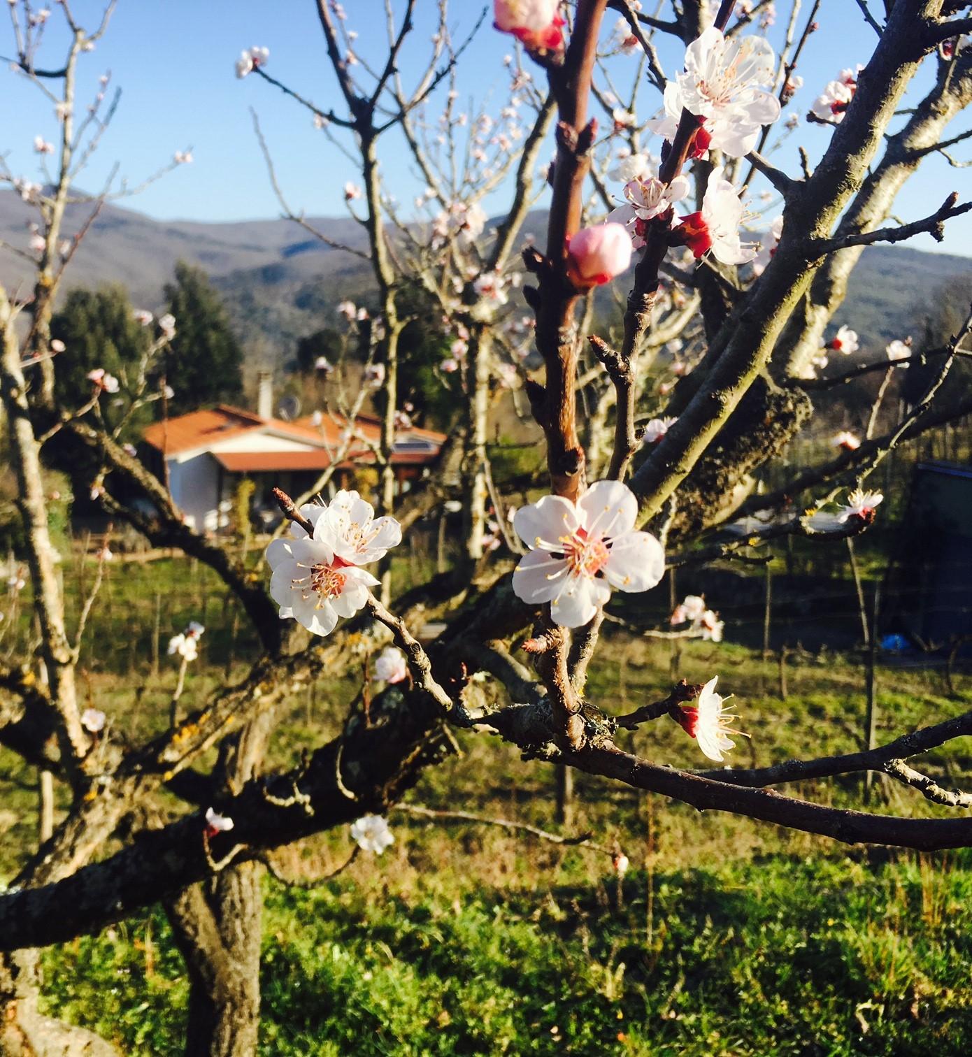 Vårlige nye viner i mars