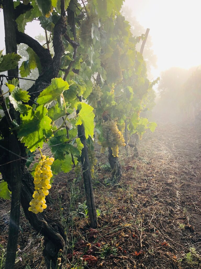 Hvordan bevare sommerfølelsen? Vi velger viner som forlenger sommeren. Her er ti vinforslag som bør gi deg stemning.
